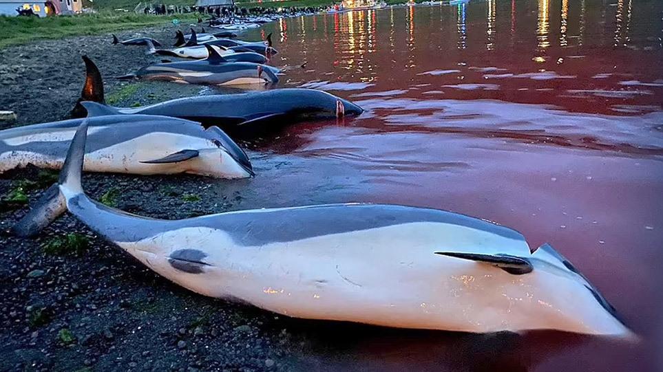 dolphin_massacre_xr