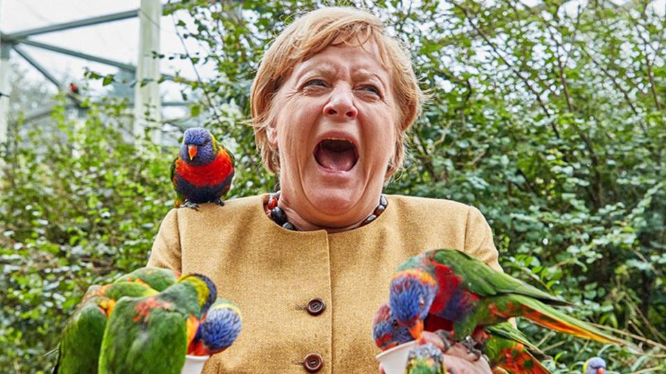 merkel_parrot_bite_xr