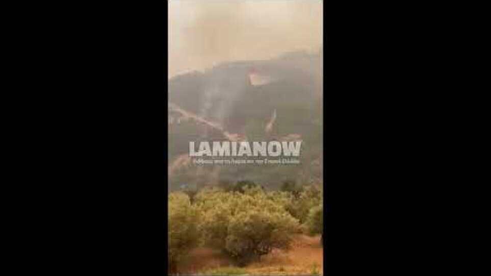 Ειδήσεις από την Λαμία, την Φθιώτιδα και την Στερεά Ελλάδα