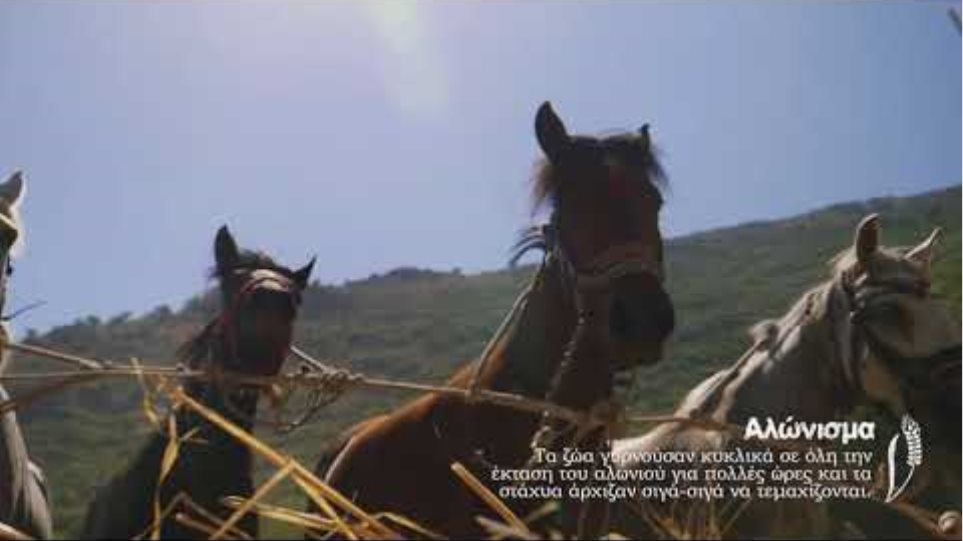 Καρύταινα Παραδοσιακός Θερισμός 31July2017