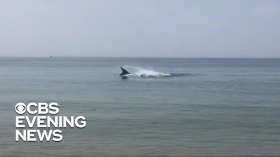 Deadly shark attack on Cape Cod