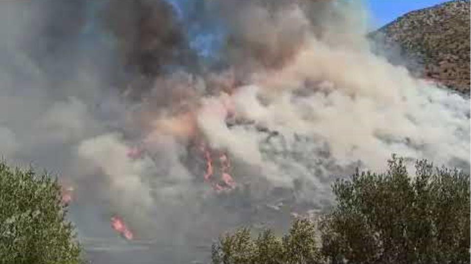 ArcadiaPortal.gr - Φωτιά στον αρχαιολογικό χώρο των Μυκηνών
