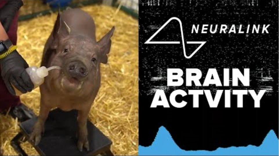 FULL REVEAL! Elon Musk's Neuralink chip tested live in pig brains