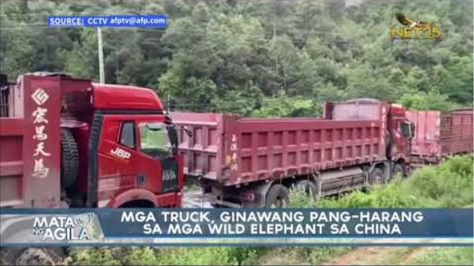 Mga truck, ginawang pang-harang sa mga wild elephant sa China