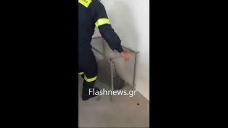 Γύπας χτύπησε σε λεωφορείο στην εθνική οδό Χανίων -Ρεθύμνου