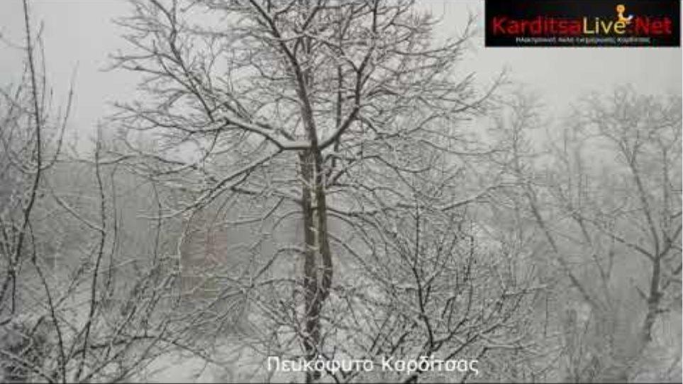 """Κακοκαιρία """"Μήδεια"""": Χιονόπτωση σε ανατολική Αργιθέα και Πευκόφυτο"""