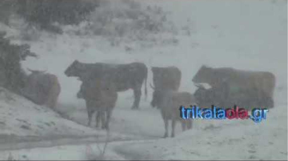Χιονόπτωση πυκνή το πρώτο χιόνι στα Περτουλιώτικα λιβάδια χιονοδρομικό κέντρο Τρικάλων 16 11 2018