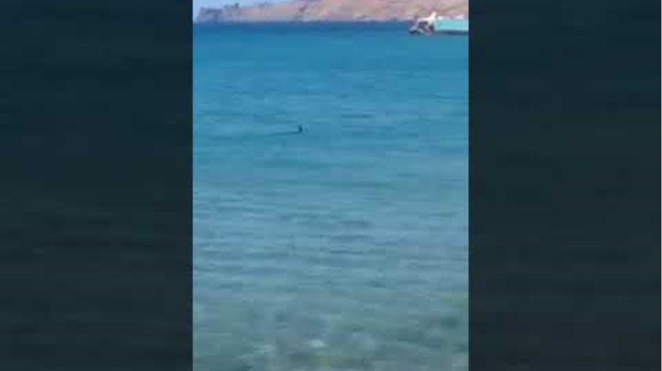 Είδαν τον καρχαρία εκεί που κολυμπούσαν !