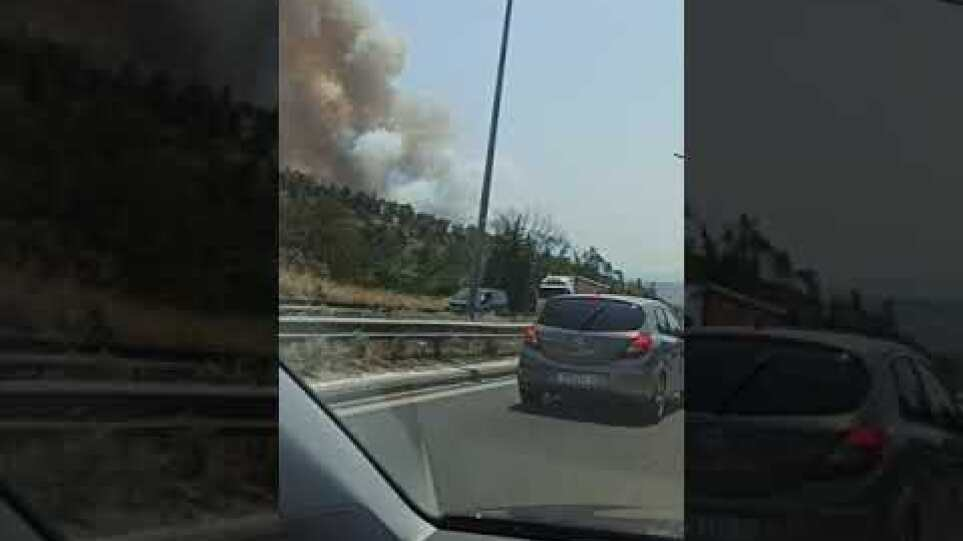 Thestival.gr φωτιά κοντά στον Ζωολογικό Κήπο της Θεσσαλονίκης