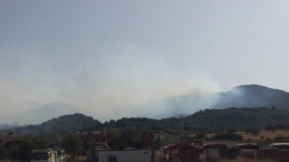Live Πυρκαγιά στο Θυρρειο Βόνιτσας