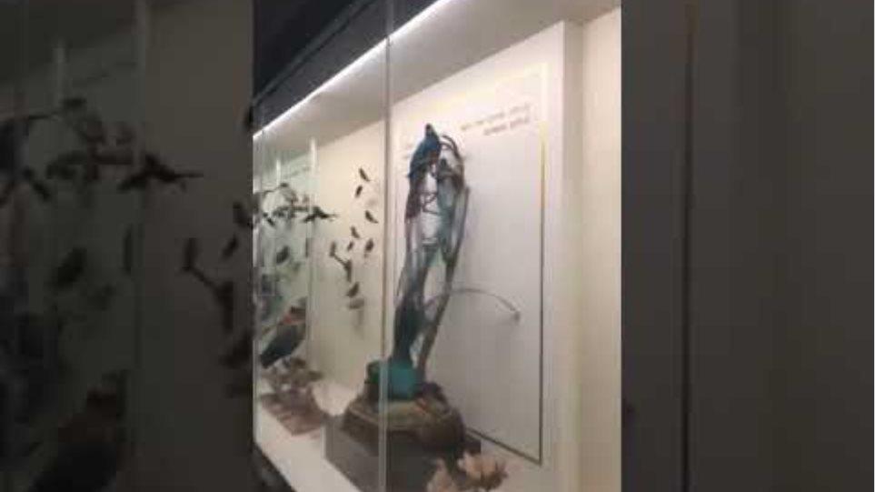 Μαρία Μενούνος στόρυ μουσείο