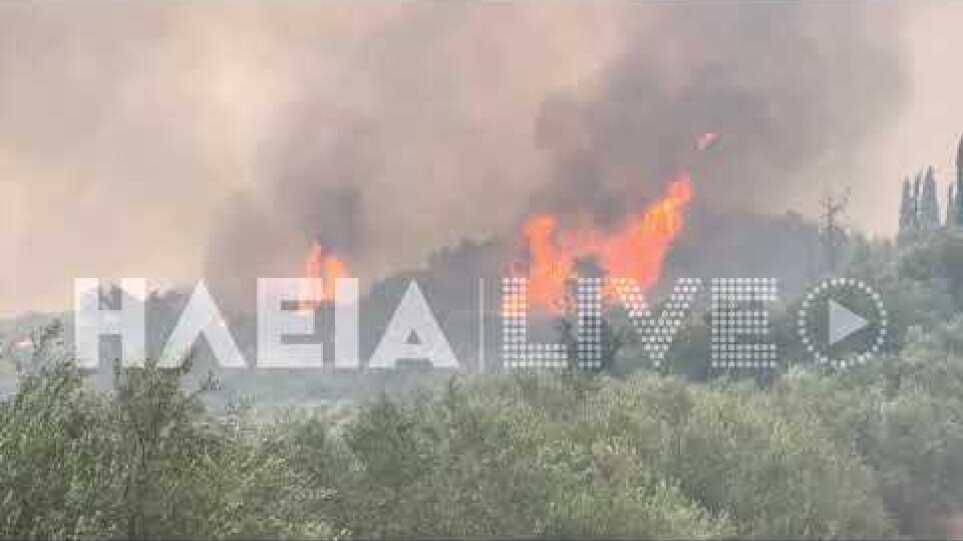 ilialive.gr - Πλησιάζει τον Κρόνιο Λόφο η πυρκαγιά