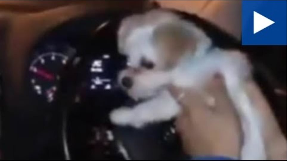 Footballer Madelene Wright Holds Her Dog Whilst Driving Her Car