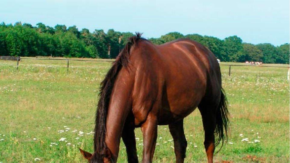Σκότωσαν και… έφαγαν (!) άλογο στην Πάρο!