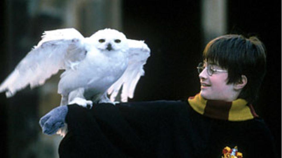 Ο Χάρι Πότερ βλάπτει τις... κουκουβάγιες