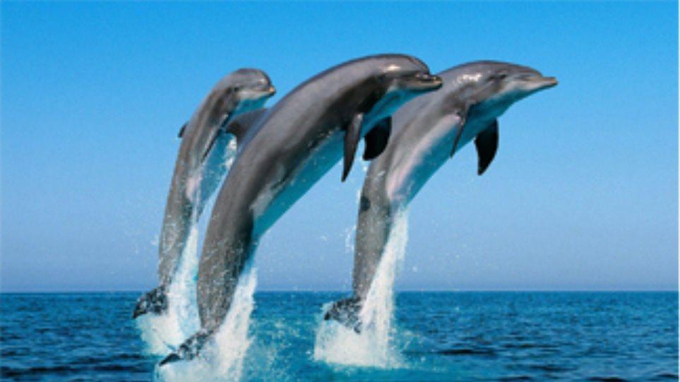 Eλπίδες θεραπείας χάρη στα διαβητικά δελφίνια!
