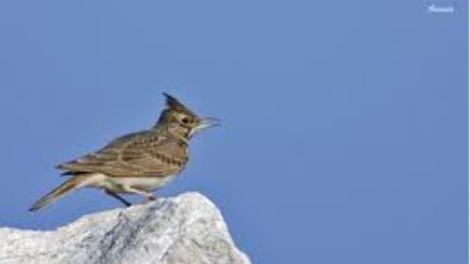ξυρισμένο πουλί φωτογραφίες