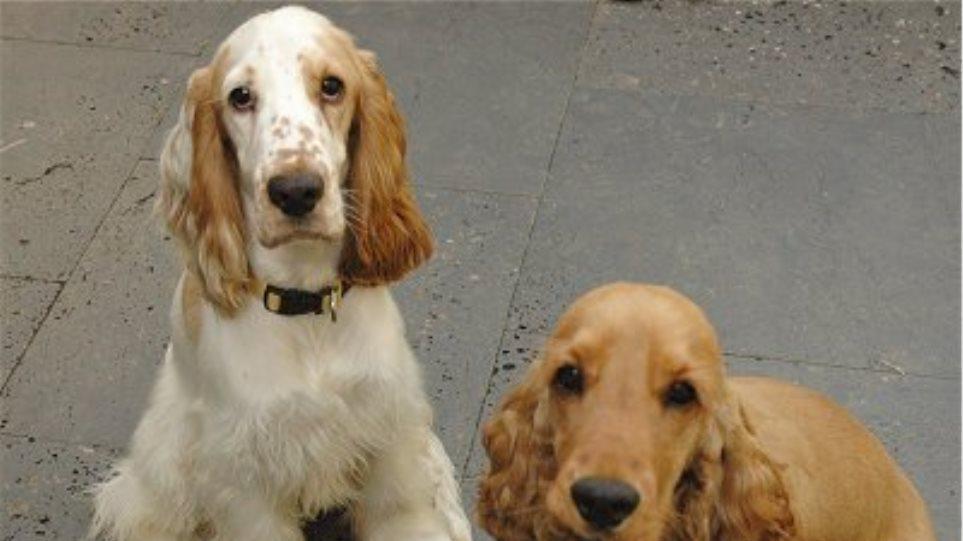 Οι σκύλοι αυξάνουν τον κίνδυνο για την εμφάνιση άσθματος στα παιδιά