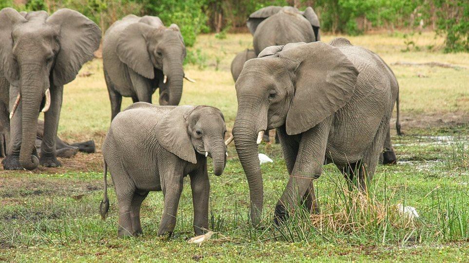 elephant-africa-ena