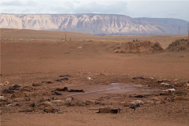Διακόσια άγρια άλογα πέθαναν από δίψα στην Αριζόνα