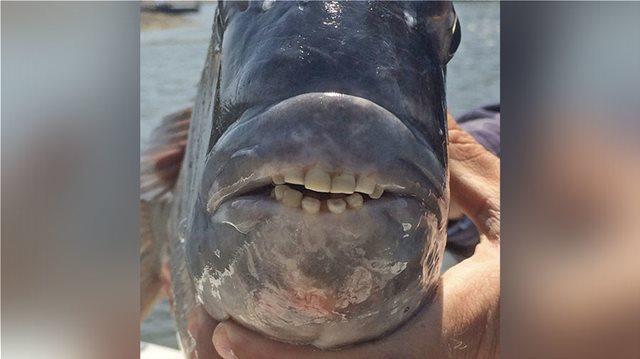 Φωτογραφία: Ψάρι με στόμα ανθρώπου στη Νότια Καρολίνα