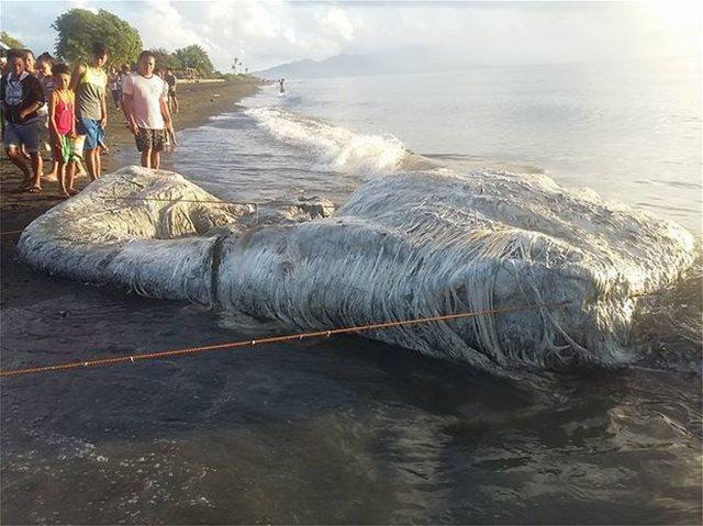 Μυστηριώδες «μαλλιαρό τέρας» ξεβράστηκε σε παραλία των Φιλιππίνων