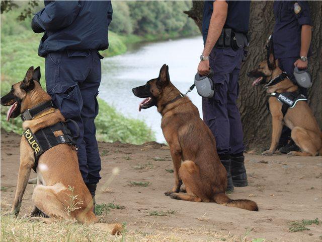 Τρίπολη: Ο σκύλος «μύρισε» ηρωίνη κρυμμένη στο Ι.Χ.