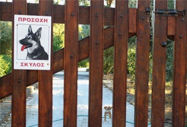 Σκύλος πήρε στο κυνήγι διαρρηκτές στη Λήμνο!