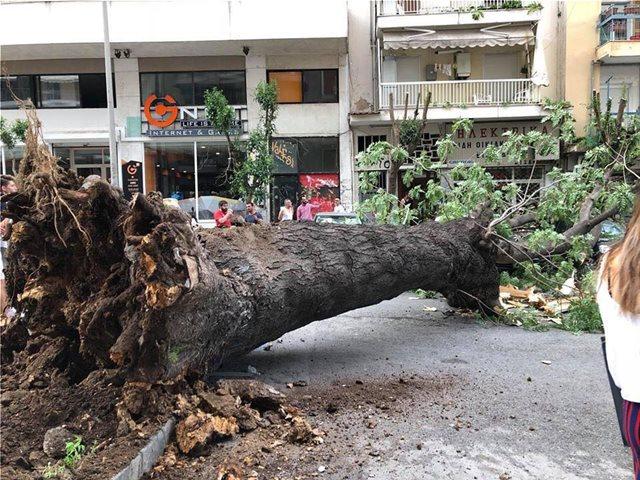 Φωτογραφίες: Δέντρο έπεσε πάνω σε δύο Ι.Χ. στο κέντρο της Θεσσαλονίκης