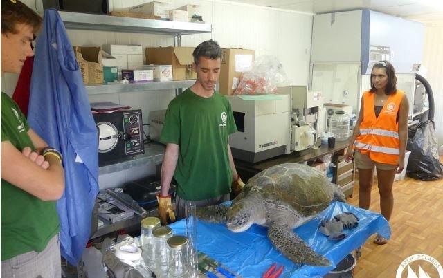 Δραματική η κατάσταση στο Αιγαίο: Σε έξαρση οι θάνατοι θαλάσσιων χελωνών