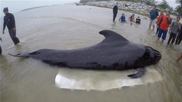 Τραγικός θάνατος για φάλαινα στην Ταϊλάνδη – Κατάπιε 80 πλαστικές σακούλες