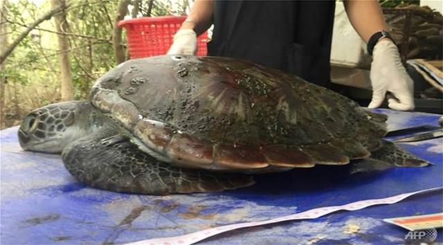 Ταϊλάνδη: Χελώνα πέθανε, επειδή κατάπιε πλαστικές σακούλες