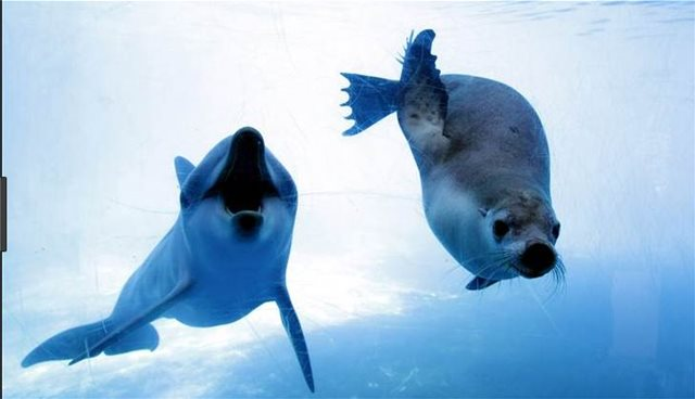 Σοκ: Ψαράδες σκοτώνουν δελφίνια και φώκιες υπό εξαφάνιση για να τα κάνουν δόλωμα!