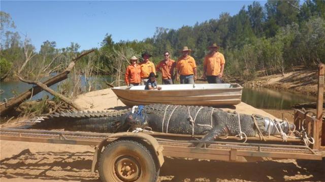 Αυστραλία: Θαλάσσιος κροκόδειλος 600 κιλών  πιάστηκε έπειτα από οκτώ χρόνια