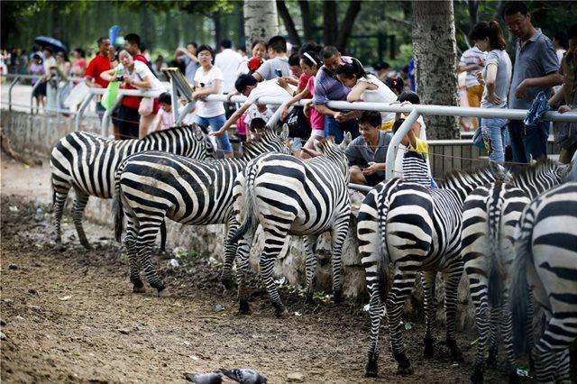 Κίνα: Ο Ζωολογικός Κήπος του Πεκίνου επιβάλει πρόστιμο σε όσους ταΐζουν ζώα