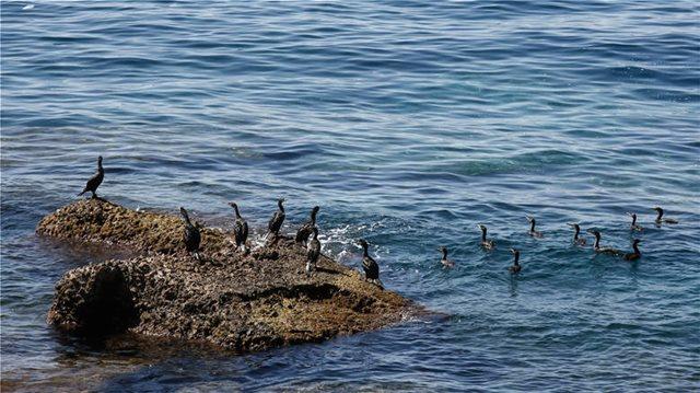 Καθηγήτρια του ΕΚΠΑ κρούει τον κώδωνα κινδύνου: «Η Ελλάδα επηρεάζεται περισσότερο από την κλιματική αλλαγή»