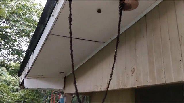 Βίντεο: Εκατομμύρια μυρμήγκια δημιούργησαν γέφυρα με τα σώματά τους για να επιτεθούν σε σφήκες!
