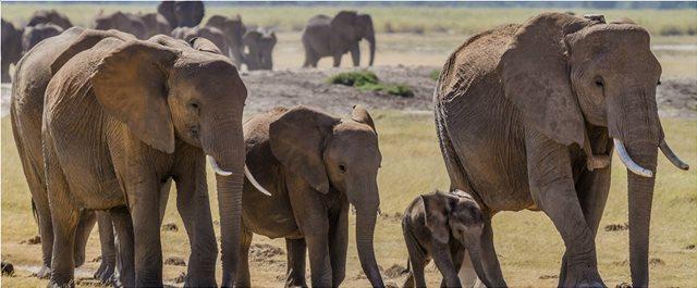 Νέα ανακάλυψη: Μυστικό γονίδιο «ζόμπι» σκοτώνει τον καρκίνο και υπάρχει μόνο στους ελέφαντες!