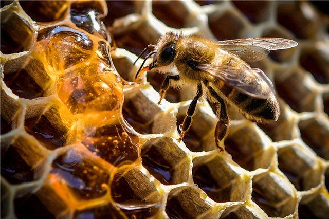 Μια μέλισσα μπορεί σταματήσει την παγκόσμια εξάρτηση από τα πλαστικά, σύμφωνα με Αυστραλούς