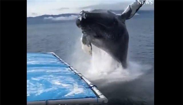 Αυτό είναι το πιο... δροσερό βίντεο: Φάλαινα κάνει... μούσκεμα τουρίστες στην Αλάσκα!