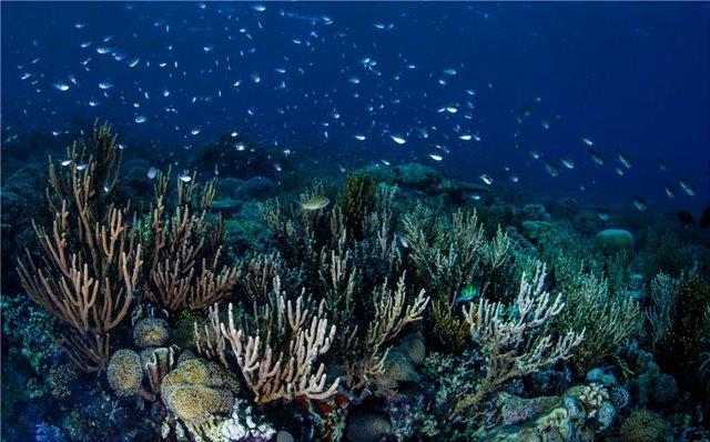 Γιγαντιαίος κοραλλιογενής ύφαλος ανακαλύφθηκε στα ανοιχτά της Νότιας Καρολίνας