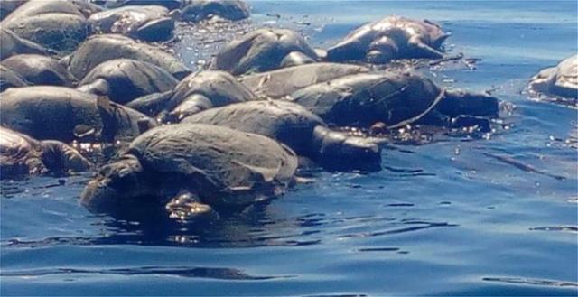 Mεξικό: Περίπου 300 χελώνες βρέθηκαν νεκρές στις νότιες ακτές της χώρας