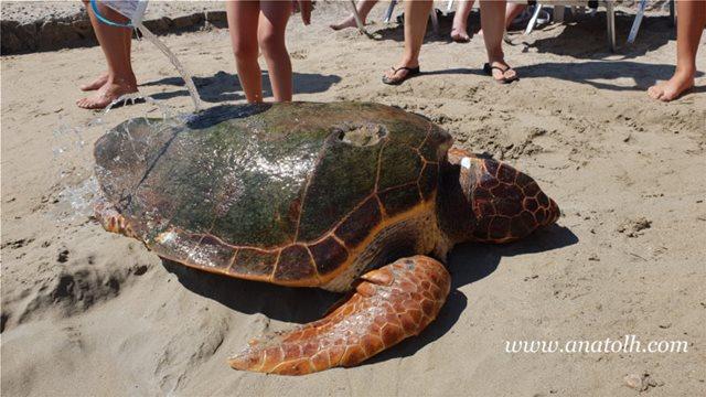 Κρήτη:  Νεκρή χελώνα ξεβράστηκε στο Αμμούδι