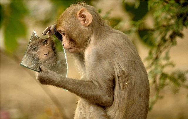 Φωτογραφίες: Μαϊμού βλέπει για πρώτη φορά τον εαυτό της στον καθρέπτη