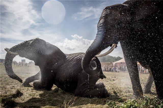 Λαθροκυνηγοί σκότωσαν 87 ελέφαντες στην Μποτσουάνα