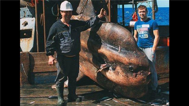 Φωτογραφίες: Ρομάν Φερντόρτσοφ... ο καλλιτέχνης-ψαράς που απαθανατίζει τα πιο περίεργα πλάσματα