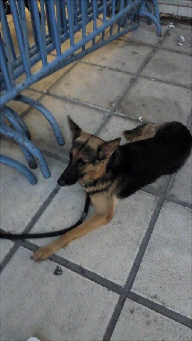 Απίστευτο: Ασυνείδητος πέταξε τον σκύλο του στον Θερμαϊκό!
