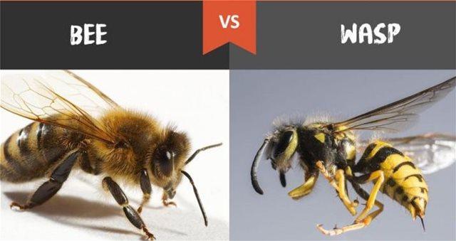 Μέλισσες vs σφήκες: Γιατί αγαπάμε τις πρώτες και μισούμε τις δεύτερες;