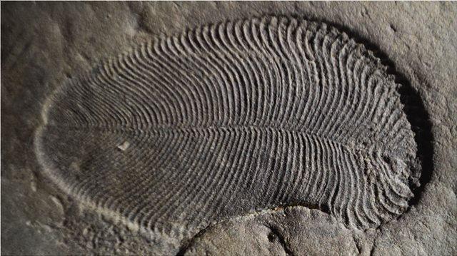 Ίχνη λίπους σε απολίθωμα ζώου που έζησε πριν από 558 εκατ. χρόνια