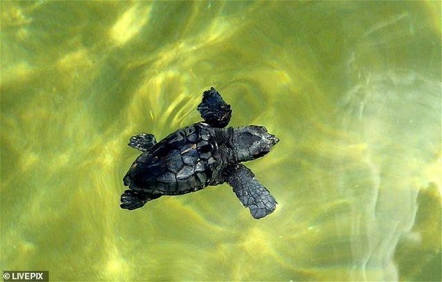Η ισπανική αστυνομία ερευνά το βιασμό τουρίστριας με.... χελώνα!